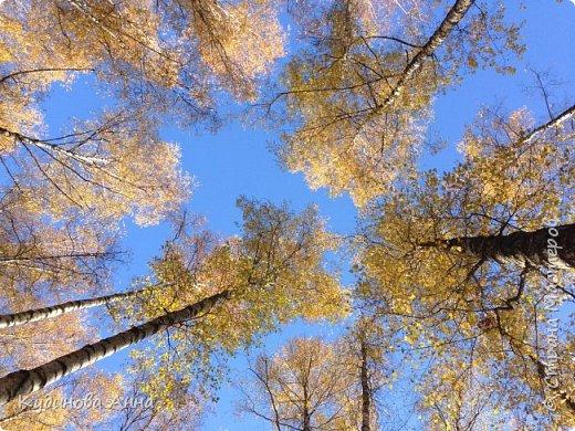 В этом году отреставрировали пруды возле нашего дома в Красногорске. И теперь там вот такая красота. В середине октября было пару солнечных ярких денечков и солнышко украсило своим сиянием все вокруг. Листики стали на солнышке волшебными, золотистыми и янтарными. Вот такой подарок!!!  фото 14