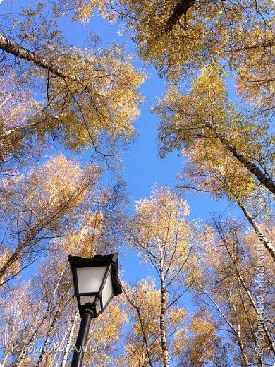 В этом году отреставрировали пруды возле нашего дома в Красногорске. И теперь там вот такая красота. В середине октября было пару солнечных ярких денечков и солнышко украсило своим сиянием все вокруг. Листики стали на солнышке волшебными, золотистыми и янтарными. Вот такой подарок!!!  фото 15