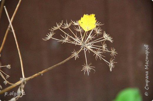 Здравствуйте!!!  Сегодня у нас идёт снежок,а я вот хочу показать фото золотой осени! 17.10.17 фото 4