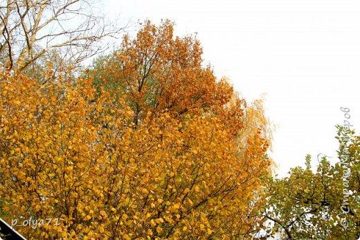 Здравствуйте!!!  Сегодня у нас идёт снежок,а я вот хочу показать фото золотой осени! 17.10.17 фото 3