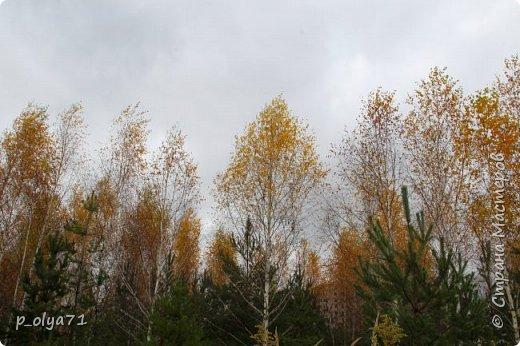 Здравствуйте!!!  Сегодня у нас идёт снежок,а я вот хочу показать фото золотой осени! 17.10.17 фото 26
