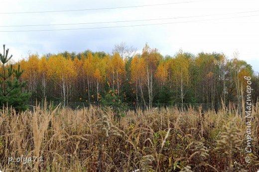 Здравствуйте!!!  Сегодня у нас идёт снежок,а я вот хочу показать фото золотой осени! 17.10.17 фото 27