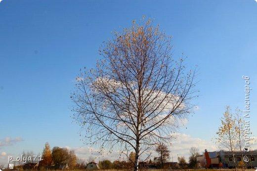 Здравствуйте!!!  Сегодня у нас идёт снежок,а я вот хочу показать фото золотой осени! 17.10.17 фото 36