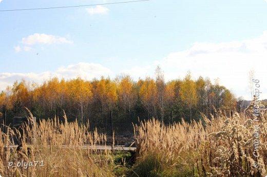 Здравствуйте!!!  Сегодня у нас идёт снежок,а я вот хочу показать фото золотой осени! 17.10.17 фото 39