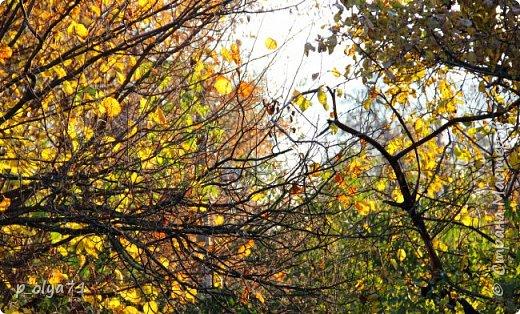 Здравствуйте!!!  Сегодня у нас идёт снежок,а я вот хочу показать фото золотой осени! 17.10.17 фото 45