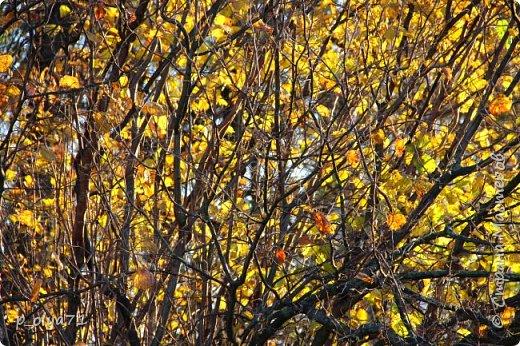 Здравствуйте!!!  Сегодня у нас идёт снежок,а я вот хочу показать фото золотой осени! 17.10.17 фото 46