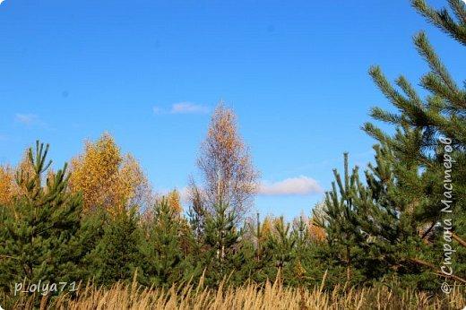 Здравствуйте!!!  Сегодня у нас идёт снежок,а я вот хочу показать фото золотой осени! 17.10.17 фото 40