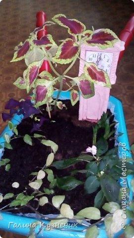 """Мини-сад, идея создать его в тачке пришла после посещения  выставки  """"Сады и люди"""" на ВДНХ  этим летом. фото 10"""