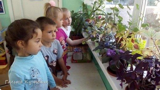 """Мини-сад, идея создать его в тачке пришла после посещения  выставки  """"Сады и люди"""" на ВДНХ  этим летом. фото 6"""