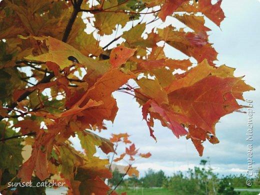 В этом году удалось встретить осень сразу в шести городах.  фото 2