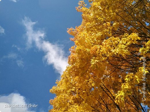 В этом году удалось встретить осень сразу в шести городах.  фото 1