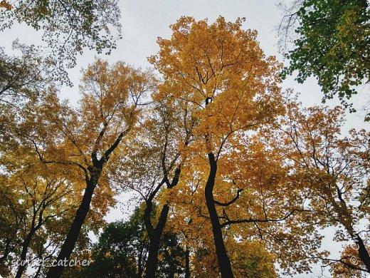 В этом году удалось встретить осень сразу в шести городах.  фото 21
