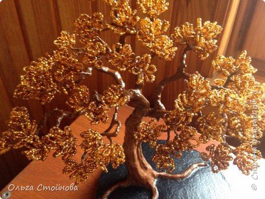 Осенний бонсай фото 4