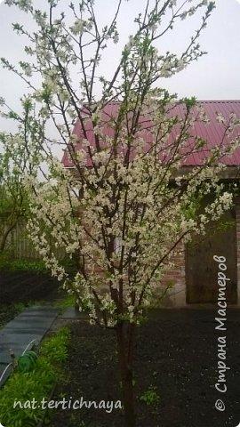 И снова цветы... Подвид ландышей, но высокие, в высоту 80 cм. фото 6