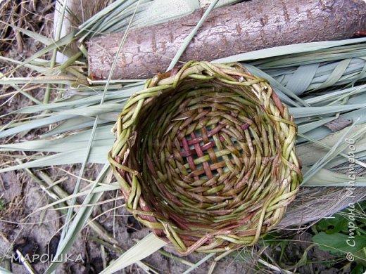плетенка из стебельков хмеля зрела давно, но попробовать сплести из этих самых стебельков заставили сами стебельки, образовавшие заросли на заборе фото 6