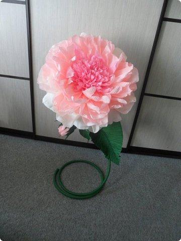 Вот с таким огромным ростовым пионом, мой студент пошёл уже в 8 класс))) фото 4