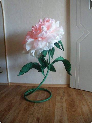 Вот с таким огромным ростовым пионом, мой студент пошёл уже в 8 класс))) фото 7