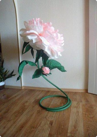 Вот с таким огромным ростовым пионом, мой студент пошёл уже в 8 класс))) фото 6