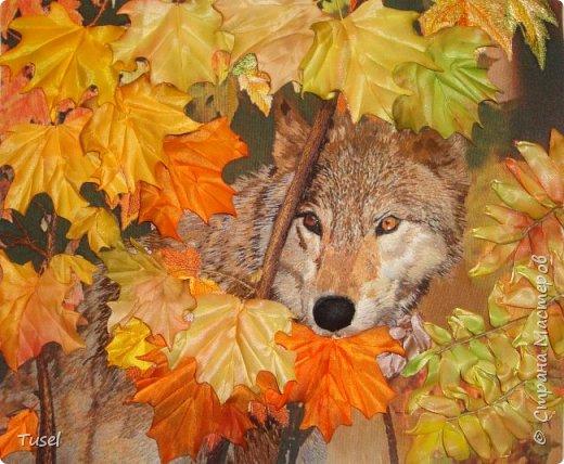 Волк фото 3