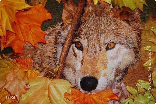 Волк фото 2