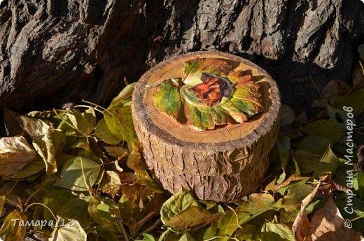 Этой осенью увлеклась гипсом. По мастер-классам Страны Мастеров научилась делать гипсовые слепки с живых листьев, аромокамни, круглые коробки на банках.Фото много, но, я думаю, они порадуют ваш глаз яркими красками осени. фото 1