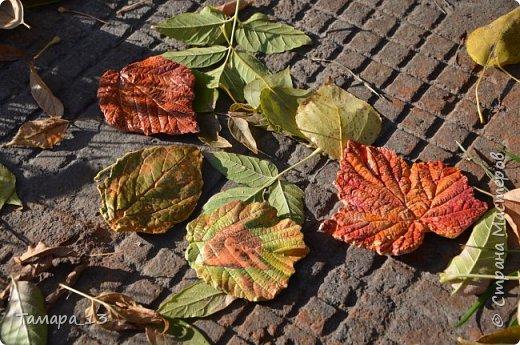 Этой осенью увлеклась гипсом. По мастер-классам Страны Мастеров научилась делать гипсовые слепки с живых листьев, аромокамни, круглые коробки на банках.Фото много, но, я думаю, они порадуют ваш глаз яркими красками осени. фото 22