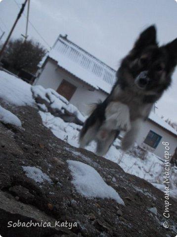 Всем привет! Давно меня здесь не было и за это время у меня появилась новая собака, а прошлая умерла((( Вот, знакомьтесь, Бакс) 2 ноября был годик)  фото 6