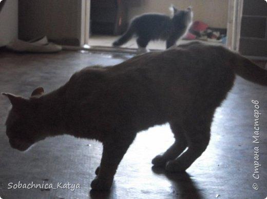 Что это у меня всё собаки да собаки, а своих котов не показываю))  Знакомьтесь - Барсик! Цветочная душа моя... фото 7