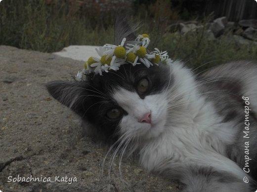 Что это у меня всё собаки да собаки, а своих котов не показываю))  Знакомьтесь - Барсик! Цветочная душа моя... фото 1