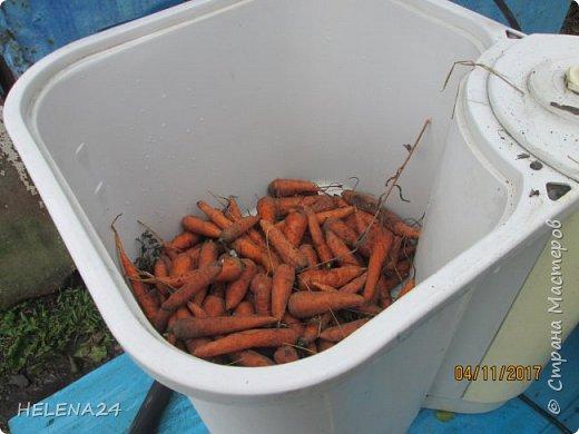 Решила селёдочку под шубой сделать на даче .А что в шубе главное (ну кроме селёдки)овощи конечно,а именно свекла и морковка .....Варятся долго .Иногда из-за этого и готовить не хочется .Я эту проблему для себя решила.забочусь об этом ещё осенью.И что особенно приятно ,использую все хвостики морковок и мелкой свеклы .Мелкий овощ у всех бывает и обычно идёт на выброс .Мелкая морковка быстро вянет,а не повянет так после чистки от неё мало ,что остаётся.А мне всегда жалко.....ну что я 5 пятой точкой зря светила......Можно конечно животинке скормить ,а если её нету.....А если весь урожай такой...И ТАК ПОЕХАЛИ .Ну как варить свеклу -моркву показывать и рассказывать я думаю не надо .В варим,чистим пускаем на тёрку или кубик,у меня это делает комбайн .И вот тут нюанс,иметь скороварку.чем больше-тем лучше..... фото 8