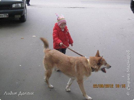 """История эта началась летом 2012 года. Я всегда считала себя """"кошатницей"""", а к собакам относилась весьма прохладно. Ну, мне они нравились, но чисто теоретически. Собаку заводить я совсем не собиралась(хлопотное это дело, а времени и так ни на что не хватает). И тут... Случайно зайдя на сайт приютов для кошек и собак( а их в Москве несколько), стала читать истории из жизни их обитателей. Как правило, грустные и безрадостные с редким счастливым концом( что эту собаку или кошку забрали из приюта и их фото до и после этого радостного события). Так, листая страницу за страницей и , чисто из любопытства, разглядывая фотографии животных, я вдруг увидела ЭТУ СОБАКУ. фото 23"""