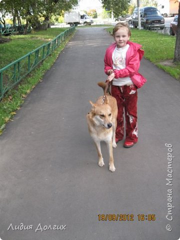 """История эта началась летом 2012 года. Я всегда считала себя """"кошатницей"""", а к собакам относилась весьма прохладно. Ну, мне они нравились, но чисто теоретически. Собаку заводить я совсем не собиралась(хлопотное это дело, а времени и так ни на что не хватает). И тут... Случайно зайдя на сайт приютов для кошек и собак( а их в Москве несколько), стала читать истории из жизни их обитателей. Как правило, грустные и безрадостные с редким счастливым концом( что эту собаку или кошку забрали из приюта и их фото до и после этого радостного события). Так, листая страницу за страницей и , чисто из любопытства, разглядывая фотографии животных, я вдруг увидела ЭТУ СОБАКУ. фото 20"""