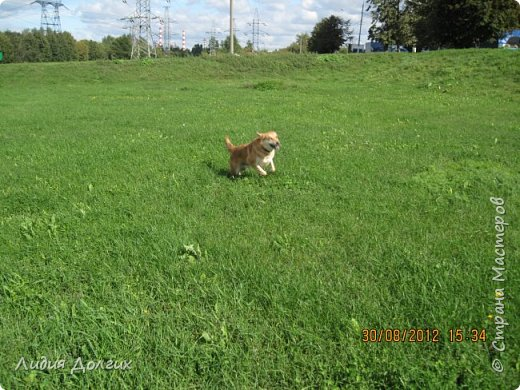 """История эта началась летом 2012 года. Я всегда считала себя """"кошатницей"""", а к собакам относилась весьма прохладно. Ну, мне они нравились, но чисто теоретически. Собаку заводить я совсем не собиралась(хлопотное это дело, а времени и так ни на что не хватает). И тут... Случайно зайдя на сайт приютов для кошек и собак( а их в Москве несколько), стала читать истории из жизни их обитателей. Как правило, грустные и безрадостные с редким счастливым концом( что эту собаку или кошку забрали из приюта и их фото до и после этого радостного события). Так, листая страницу за страницей и , чисто из любопытства, разглядывая фотографии животных, я вдруг увидела ЭТУ СОБАКУ. фото 37"""
