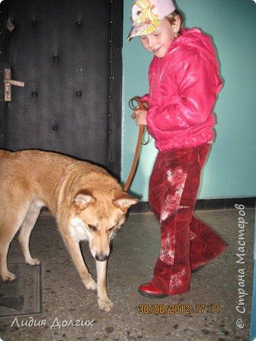 """История эта началась летом 2012 года. Я всегда считала себя """"кошатницей"""", а к собакам относилась весьма прохладно. Ну, мне они нравились, но чисто теоретически. Собаку заводить я совсем не собиралась(хлопотное это дело, а времени и так ни на что не хватает). И тут... Случайно зайдя на сайт приютов для кошек и собак( а их в Москве несколько), стала читать истории из жизни их обитателей. Как правило, грустные и безрадостные с редким счастливым концом( что эту собаку или кошку забрали из приюта и их фото до и после этого радостного события). Так, листая страницу за страницей и , чисто из любопытства, разглядывая фотографии животных, я вдруг увидела ЭТУ СОБАКУ. фото 21"""