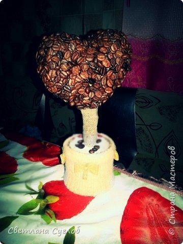 Моё первое кофейное дерево в подарок любимой мамочке!!!У моей мамы семеро детей и в этом году у неё родился десятый внук))) фото 2