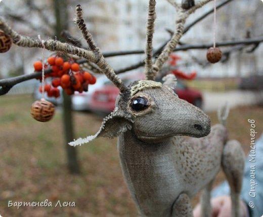 Вот он, мой лесной олень. Красивый, гордый,  немного пугливый и таинственный. фото 2