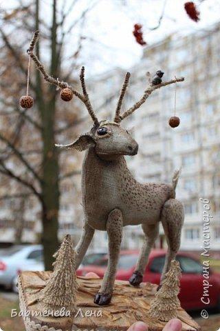 Вот он, мой лесной олень. Красивый, гордый,  немного пугливый и таинственный. фото 4