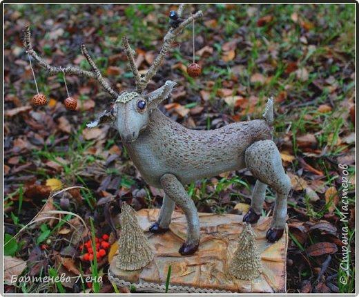 Вот он, мой лесной олень. Красивый, гордый,  немного пугливый и таинственный. фото 1
