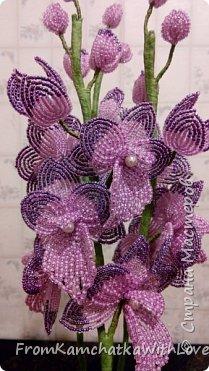 Орхидея Биг лип фото 2
