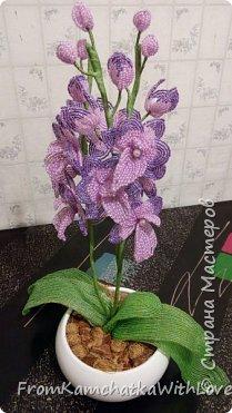 Орхидея Биг лип фото 1