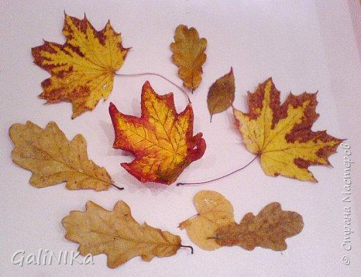 Хороший был сегодня день!  Раскрасила я утром лист кленовый, запечатлённый в глине.  фото 7