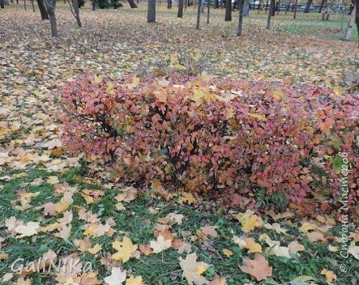 Хороший был сегодня день!  Раскрасила я утром лист кленовый, запечатлённый в глине.  фото 10