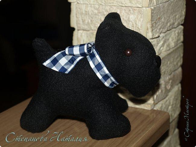Добрый вечер, прошу прощения за фото, черная собака почти не получилась((( фото 5