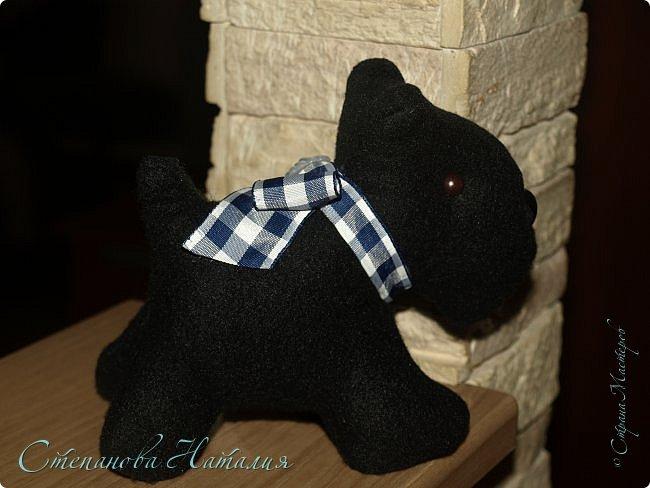 Добрый вечер, прошу прощения за фото, черная собака почти не получилась((( фото 6