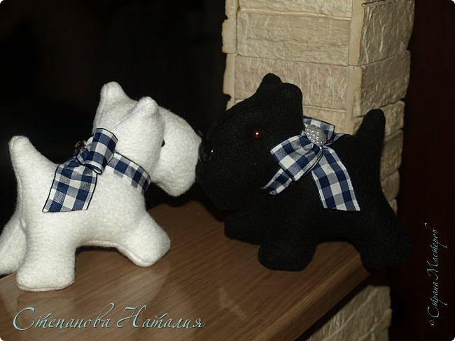 Добрый вечер, прошу прощения за фото, черная собака почти не получилась((( фото 1
