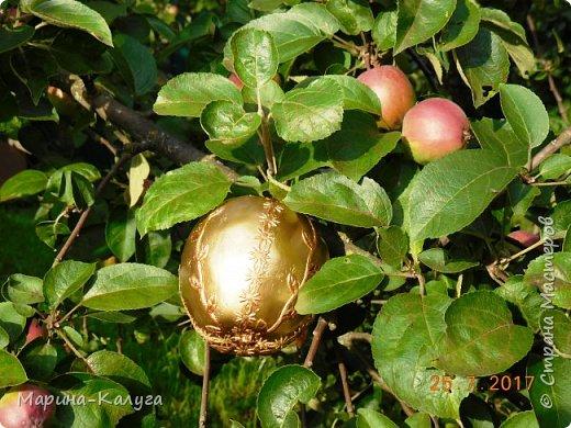 """Всем добрый день! Спасибо всем """"садоводам-яблоковедам"""" нашей страны за идеи, а особенно  Ольге Бэк за МК по чудесным яблочкам. фото 5"""