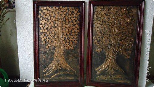 Денежное дерево . фото 5