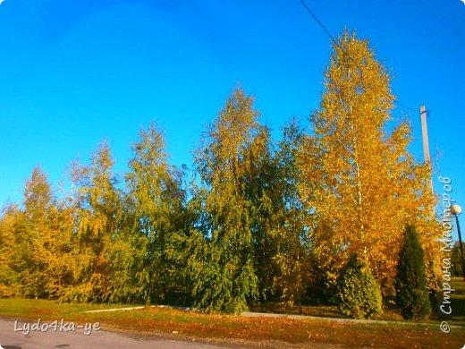 """Вот и осень пришла. Разукрасила деревья в яркие цвета! Особенная красота в осени 2017г. Она вдохновляет, удивляет, заставляет творить. Вот и у меня """"родилась"""" осенняя берёза - плод моих наблюдений за осенними переменами фото 2"""