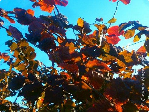 """Вот и осень пришла. Разукрасила деревья в яркие цвета! Особенная красота в осени 2017г. Она вдохновляет, удивляет, заставляет творить. Вот и у меня """"родилась"""" осенняя берёза - плод моих наблюдений за осенними переменами фото 8"""