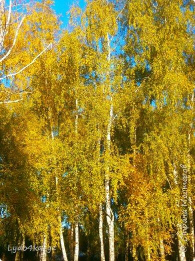 """Вот и осень пришла. Разукрасила деревья в яркие цвета! Особенная красота в осени 2017г. Она вдохновляет, удивляет, заставляет творить. Вот и у меня """"родилась"""" осенняя берёза - плод моих наблюдений за осенними переменами фото 3"""